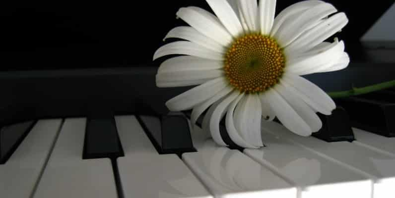 A flower on a piano.